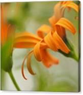 Whispers Of Orange Symphony Canvas Print
