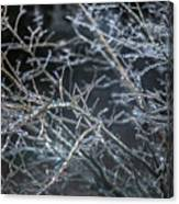 Whispers Of Winter Canvas Print