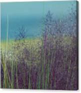 Whispy Field Canvas Print