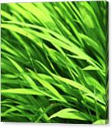 Whistle The Grass Canvas Print