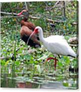Whistler And Ibis Canvas Print