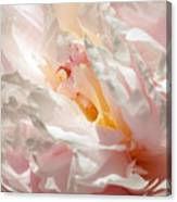 White And Pink Peony 3 Canvas Print