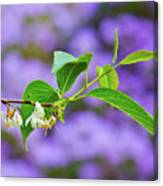 White And Purple Spring 2 Canvas Print