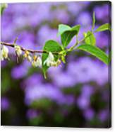White And Purple Spring Canvas Print