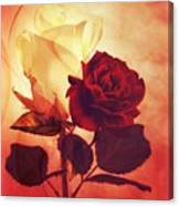 White And Red Roses Canvas Print