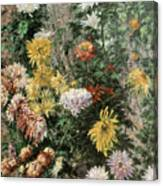 White And Yellow Chrysanthemums In The Garden At Petit Gennevilliers Canvas Print