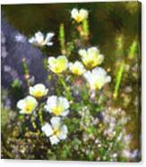 White And Yellow Poppies Abstract 2   Canvas Print