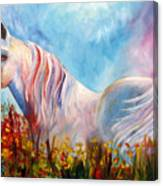 White Arabian Horse Canvas Print