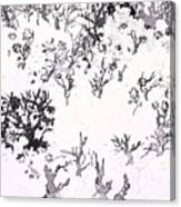 White As Snow Canvas Print
