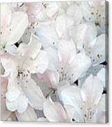 White Azaleas 1 Canvas Print