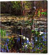 White Azaleas In The Swamp Canvas Print