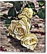 White Baby Roses Canvas Print