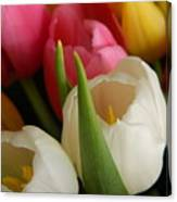 White Balance In Spring Canvas Print
