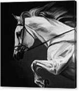 White Beautiful Horse B And W Canvas Print