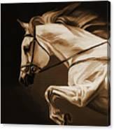 White Beautiful Horse  Canvas Print