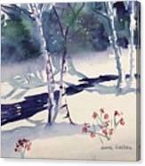 White Birches Canvas Print