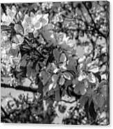 White Blossoms In Black And White Canvas Print
