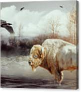 White Buffalo And Raven Canvas Print