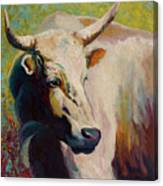 White Bull Portrait Canvas Print
