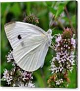 White Butterfly At The Good Earth Market Canvas Print