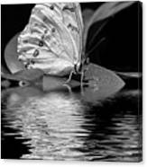 White Butterfly Bw Canvas Print