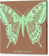 White Butterfly Swallow Tail Le Papillon Machaon Canvas Print