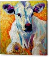 White Calf Canvas Print