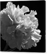 White Carnation Monochrome Canvas Print