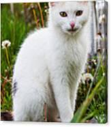 White Cat Sitting Canvas Print