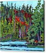 White Cedar Shore Canvas Print