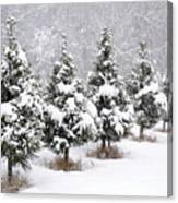 White Christmas At The Christmas Tree Farm Canvas Print