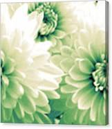 White Chrysanth Flowers Canvas Print