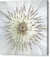 White Clematis Flower Garden 50121b Canvas Print