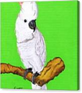 White Cockatoo Canvas Print