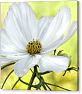 White Cosmos Floral Canvas Print
