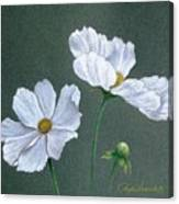White Cosmos Canvas Print