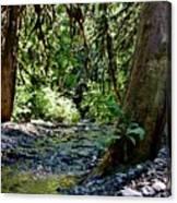 White Creek Canvas Print