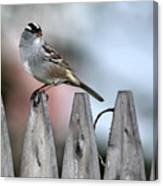 White-crowned Sparrow 2 Canvas Print