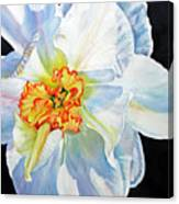 White-daffodil Canvas Print