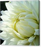 White Dahlia Flower Art Print Canvas Floral Dahlias Baslee Troutman Canvas Print