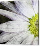 White Daisy Canvas Print