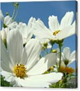 White Daisy Flowers Fine Art Photography Daisies Baslee Troutman Canvas Print