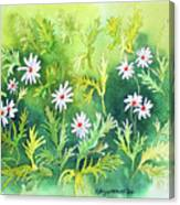 White Daisys Canvas Print