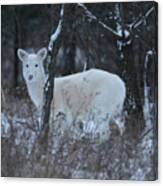 White Deer In Winter Canvas Print