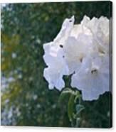 White Desert Flowers Canvas Print