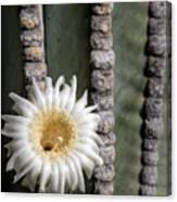 White Desert Jewel Canvas Print