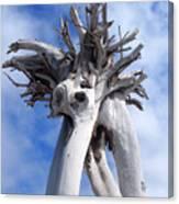 White Desert Tree Canvas Print