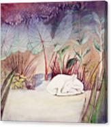 White Doe Dreaming Canvas Print