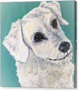 White Dog Canvas Print