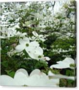 White Dogwood Flowers 6 Dogwood Tree Flowers Art Prints Baslee Troutman Canvas Print
